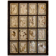 Collection of 16 Italian Herbiers Set in Large Paned Window Frame
