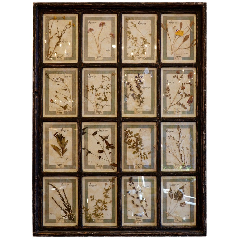 Collection of 16 Italian Herbiers Set in Large Paned Window Frame For Sale