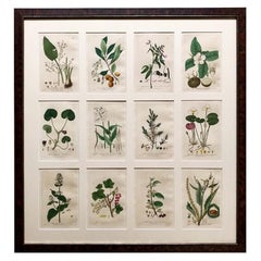 Collection of 24 Framed Baxter Botanical Prints