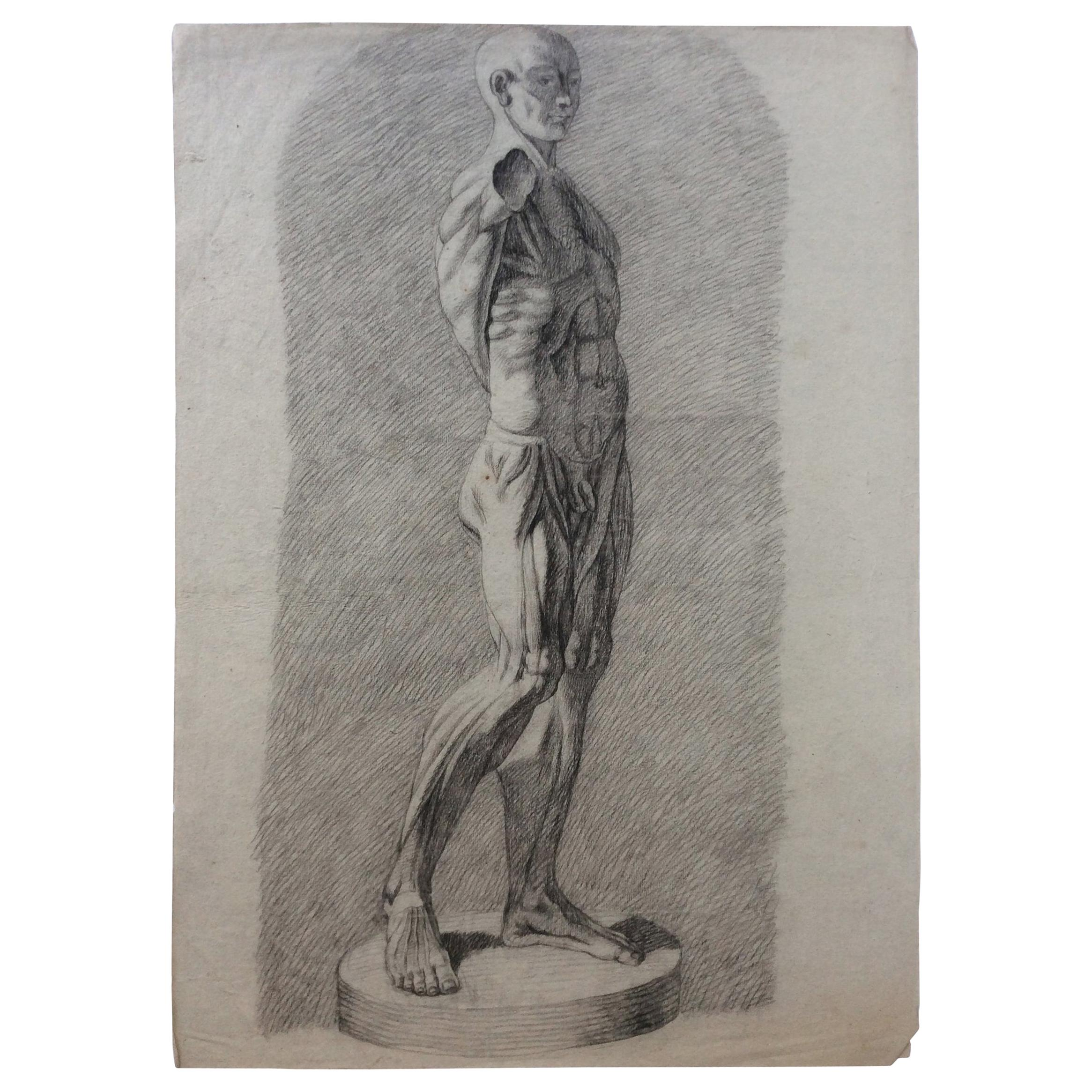 Collection of 4 Antique Anatomical Drawings