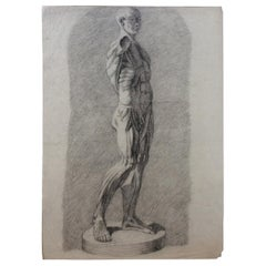 Collection of 4 Antique Anatomical Drawings Male Nudes