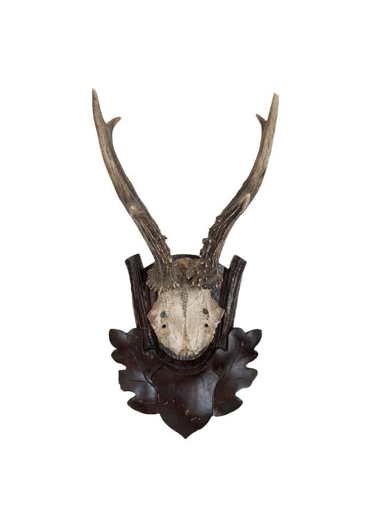 Collection of 8 Black Forest Antler Mounts on Hand-Carved Wood Plaques For Sale 5