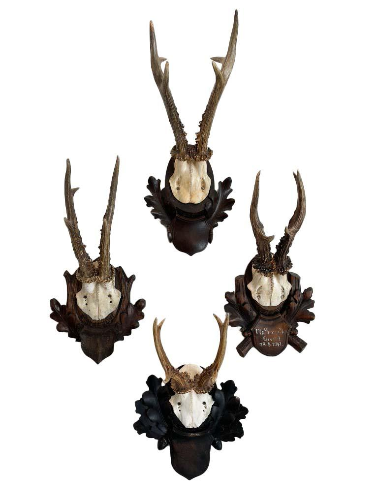 Austrian Collection of 8 Black Forest Antler Mounts on Hand-Carved Wood Plaques For Sale