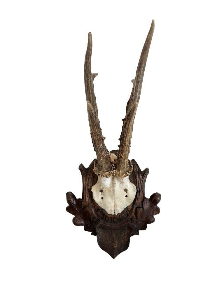 19th Century Collection of 8 Black Forest Antler Mounts on Hand-Carved Wood Plaques For Sale