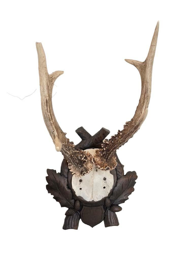 Collection of 8 Black Forest Antler Mounts on Hand-Carved Wood Plaques For Sale 1