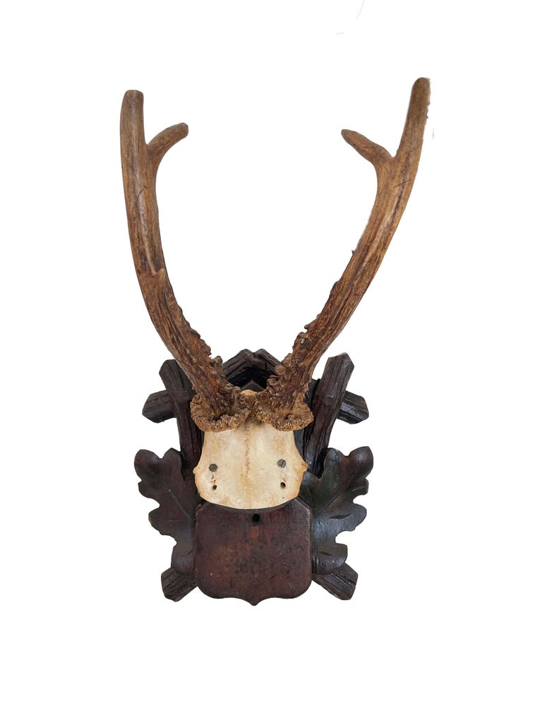 Collection of 8 Black Forest Antler Mounts on Hand-Carved Wood Plaques For Sale 4