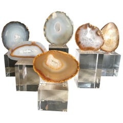 Collection of Agate Slices Mounted on Lucite