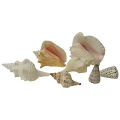 Collection of Coastal Large and Small Sea Shells