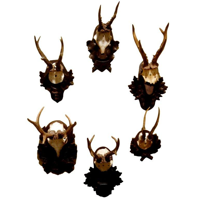 Collection of Five Black Forest Roe Mounts on Carved Wood Plaques Priced per mou