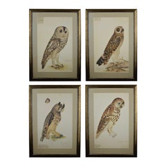 Collection of Four Large Olof Rudbeck the Younger Owl Limited Edition Prints