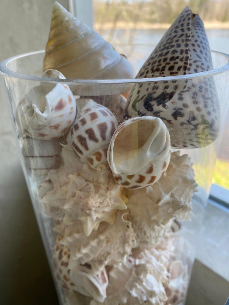 20th Century Collection of Sea Shells For Sale
