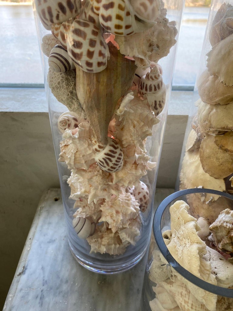 Collection of Sea Shells For Sale 4