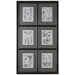 !8 th Century style Collection of Six Botanical Print with black wooden frame