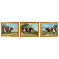 Collection of Three English Naive School Prized Cattle Oil on Canvas Paintings