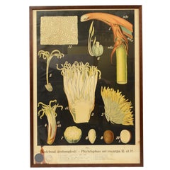 Colored Botanical Lithograph Bohemian Manufacture of the 1930s