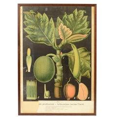 Farbige Botanische Lithographie Böhmische Manufacture aus den 1930ern