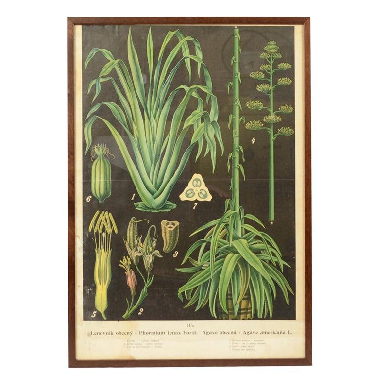 Bohemian colored botanical lithograph, 1930s, offered by Antik Arte & Scienza sas di Daniela Giorgi