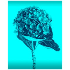 Contemporary Blue Colored Flowers Photography by Mónica Sánchez-Robles