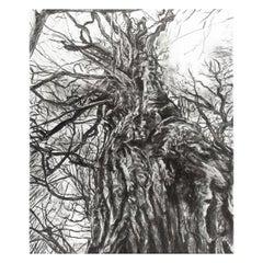 Contemporary Charcoal artwork Tom De Doncker