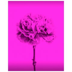 Contemporary Colored Flowers Photography by Mónica Sánchez-robles