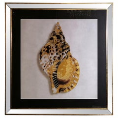 Contemporary Italian Golden Shell Print, Gilded Wood Frame with Mirror '3 of 4'