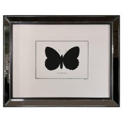 Contemporary Italian Hand Colored Butterfly Print with Mirror Frame
