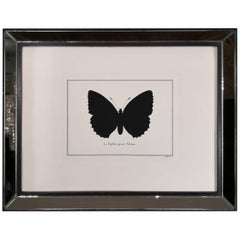 Contemporary Italian HandColored Poplar Admiral Butterfly Print with MirrorFrame