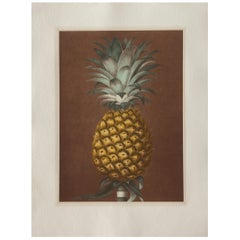 Contemporary Italian Pineapple Hand-Colored Print Set of 2