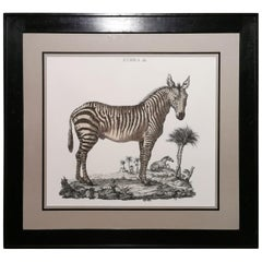 Contemporary Jungle Style Zebra Hand Watercolored Print with Balck Coated Frame
