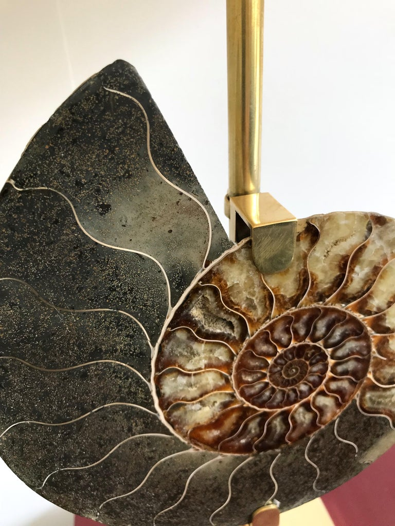 Italian Contemporary Pair of Brass Lamps Ammonite Fossil, Italy For Sale