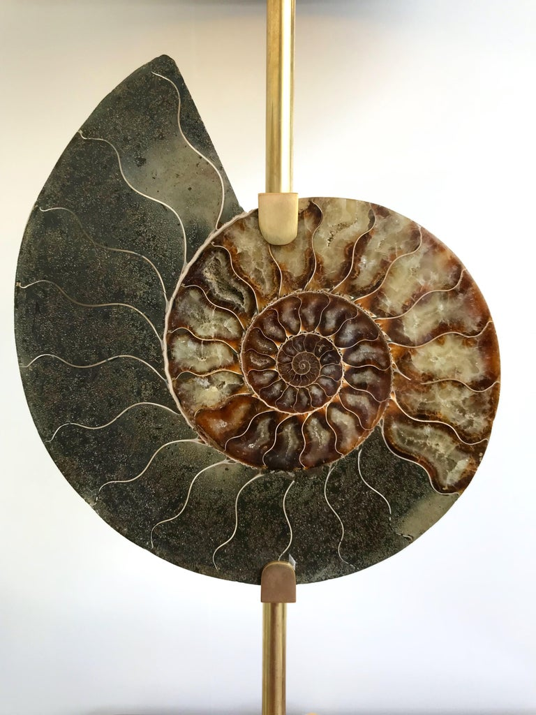 Contemporary Pair of Brass Lamps Ammonite Fossil, Italy For Sale 3