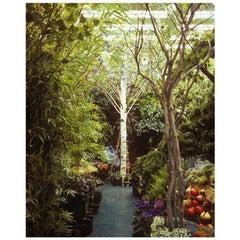 "Contemporary Paula Anta ""Seul 01"" Series ""Artificial Paradise"" Photography"