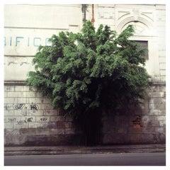 Contemporary Photography by Felipe Varanda, Limited Edition