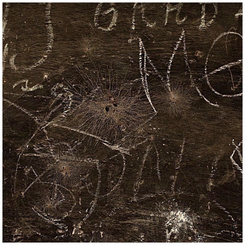 "Contemporary Photography ""Habitat e Inscrições"" by Felipe Varanda, Limited Ed."