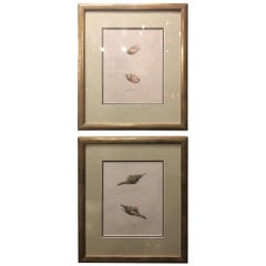 """Continental School """"Seashells"""", Pair of Hand-Colored Lithographs, 19th Century"""