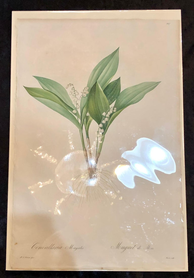 Convallaria Majalis Print Hand Colored Engraving Signed P.J. Redoute For Sale 6