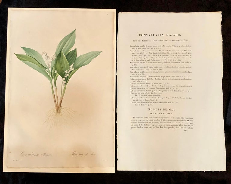 Minimalist Convallaria Majalis Print Hand Colored Engraving Signed P.J. Redoute For Sale
