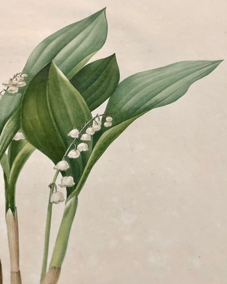 Hand-Painted Convallaria Majalis Print Hand Colored Engraving Signed P.J. Redoute For Sale