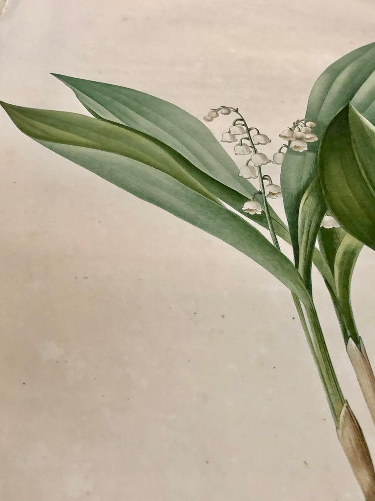 Convallaria Majalis Print Hand Colored Engraving Signed P.J. Redoute In Good Condition For Sale In Stamford, CT