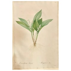 Convallaria Majalis Print Hand Colored Engraving Signed P.J. Redoute