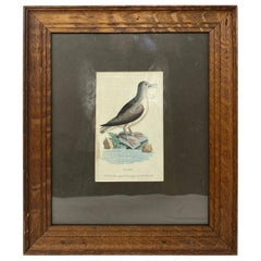 Copperplate Engraving Framed, circa 1799