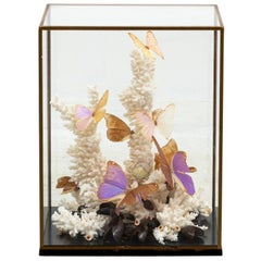Coral and Butterfly Display Diorama