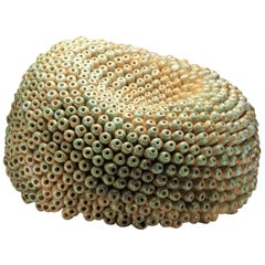 Coral Formation 1 Sculpture