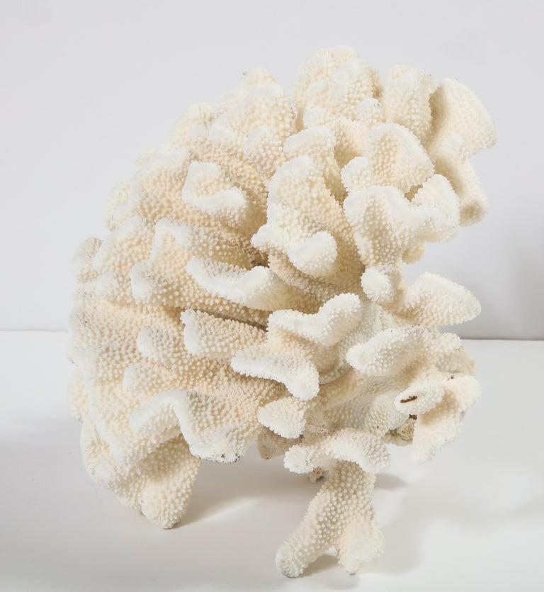 Coral, Vintage For Sale 5