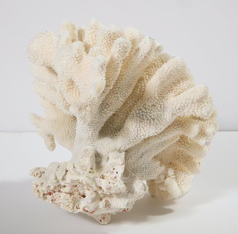 Coral, Vintage For Sale 3