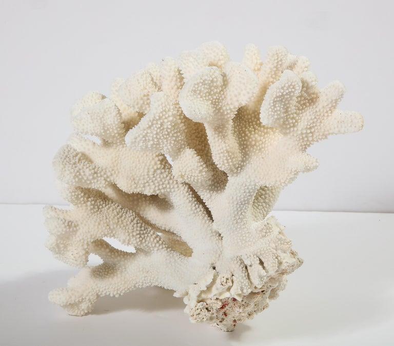 Coral, Vintage For Sale 4