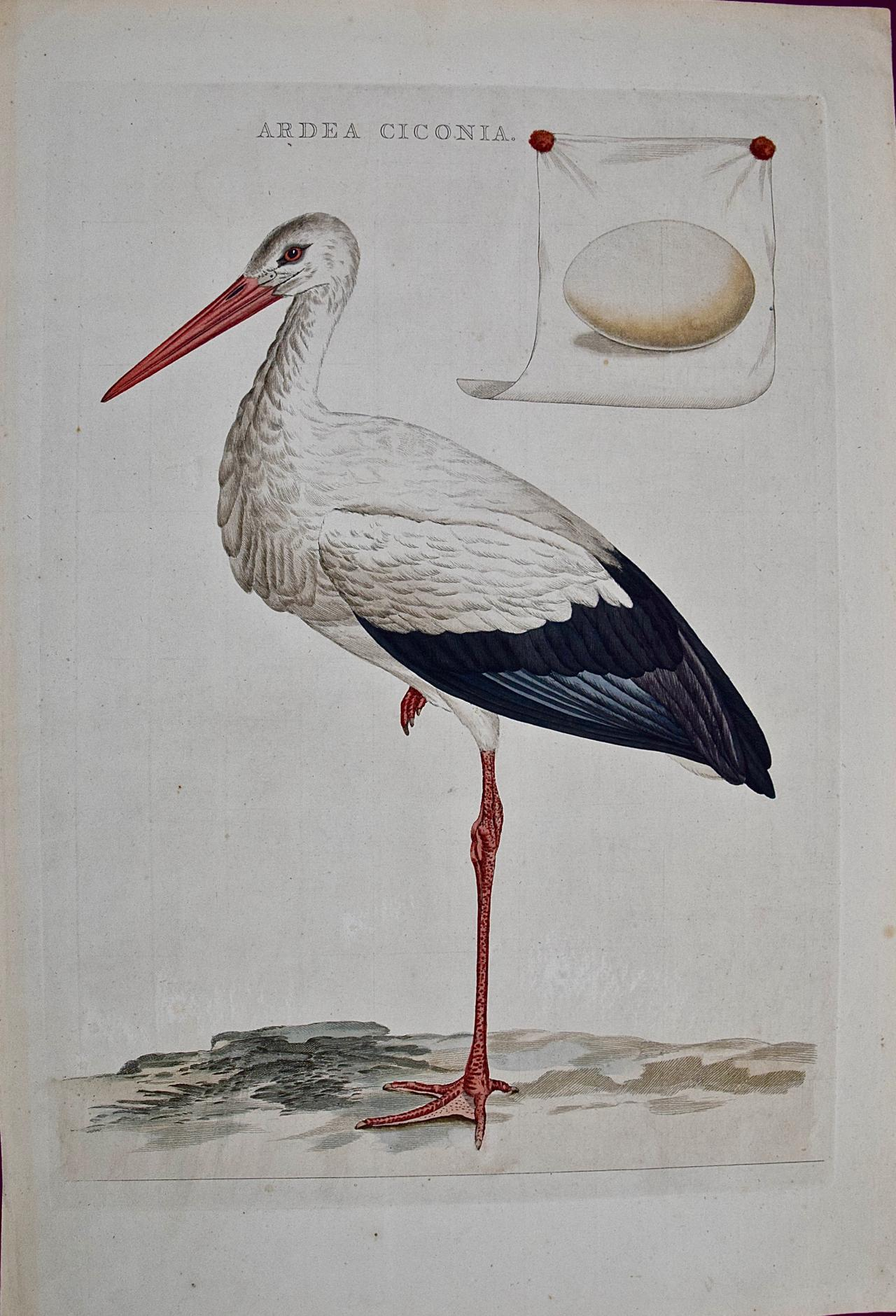 """An 18th Century Hand-colored Nozeman Engraving """"Ardea Ciconia"""" or White Stork"""