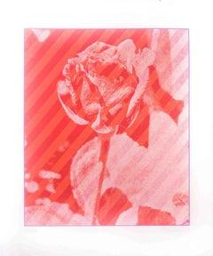 Rose - Original Screen Print by Costantino Persiani - 1973