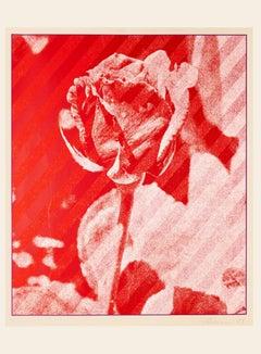 The Rose - Original Screen Print by Costantino Persiani - 1973