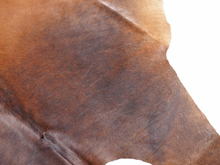 Brazilian Cowhide Rug Brown Extra Large Size For Sale